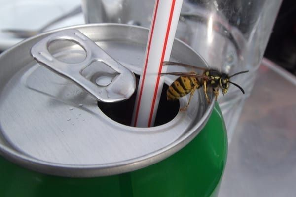 Wasps are attracted to the sugar in food and drinks (Photo: Shutterstock)