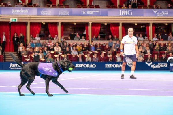 This lively black Labrador was one of the ball dogs helping out (Photo: SWNS)