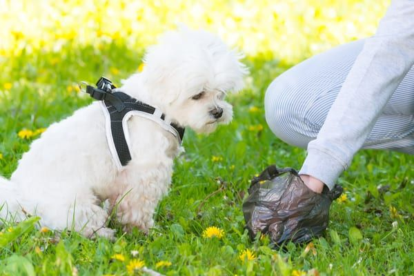 If you fail to clean up after your dog you can be given an on-the-spot fine (Photo: Shutterstock)