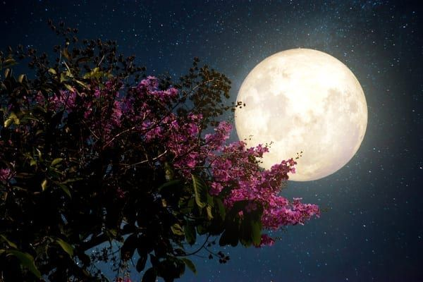 'Pink Moon' to rise in the sky on Good Friday