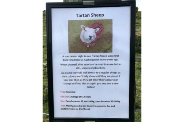 The tongue-in-cheek sign attached to the tartan sheeps' pen (Photo: SWNS)