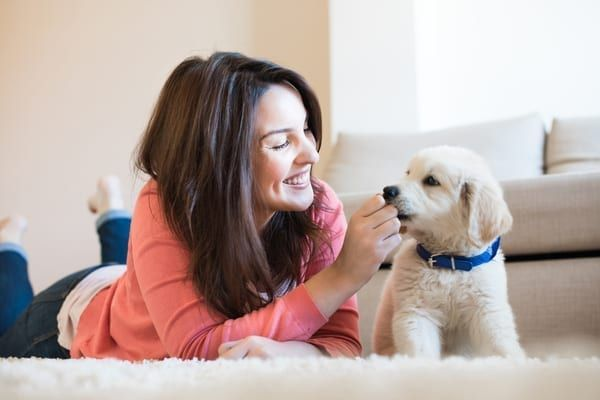 Before the tenant fees ban, landlords would often take additional rent as a safety deposit against pets in homes (Photo: Shutterstock)